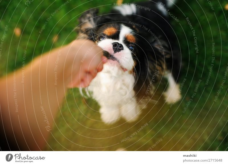 dog playing with his owner with toy on the walk. Joy Happy Beautiful Relaxation Playing Vacation & Travel Freedom Summer Garden Nature Animal Grass Park Pet Dog
