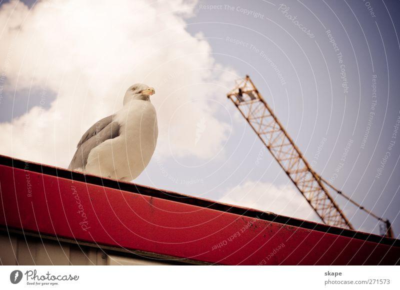 site supervision Port City Roof Animal Bird Bright Life Nature Rotterdam Colour photo Exterior shot Day Animal portrait