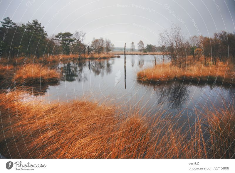 moorland Environment Nature Landscape Plant Air Water Clouds Horizon Autumn Bad weather Rain Tree Grass Bushes Wild plant Forest Bog Marsh Pond Lake Gloomy Calm