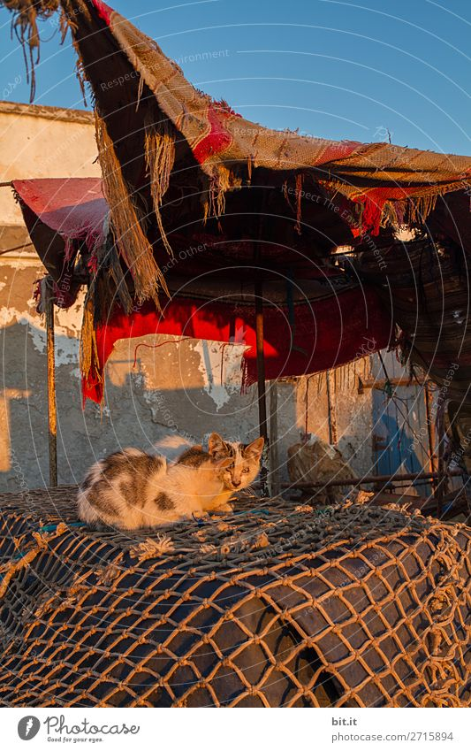 Young cats, on fishing nets, in the harbour. Harbour Animal Pet Cat Poverty Dirty Thin Sordid Slum area Exterior shot Deserted Morning Dawn Twilight Light