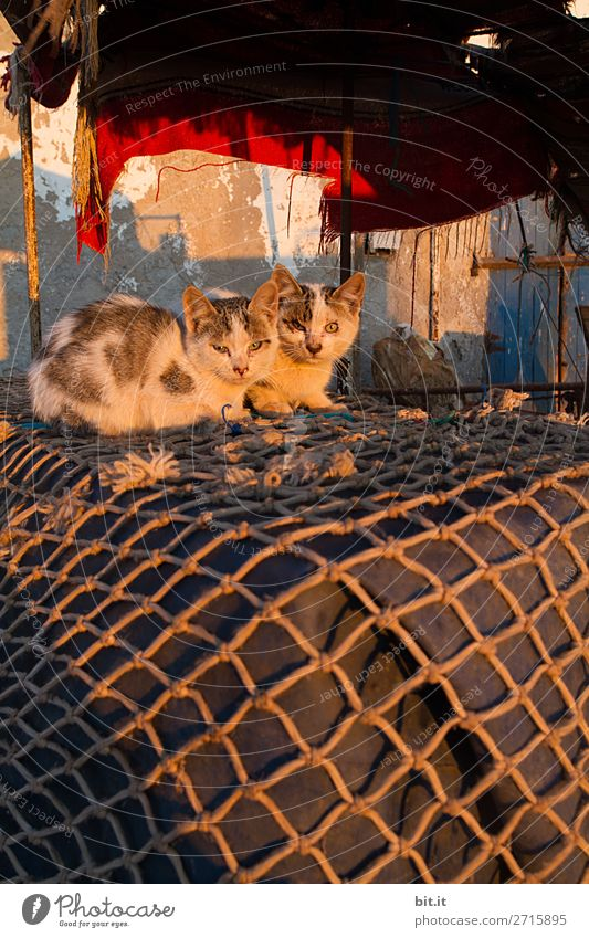 Two young cats lying on fishing nets in the morning sun. Animal Pet Cat 2 Pair of animals Baby animal Lie Sleep Fishing net Fishing village Colour photo