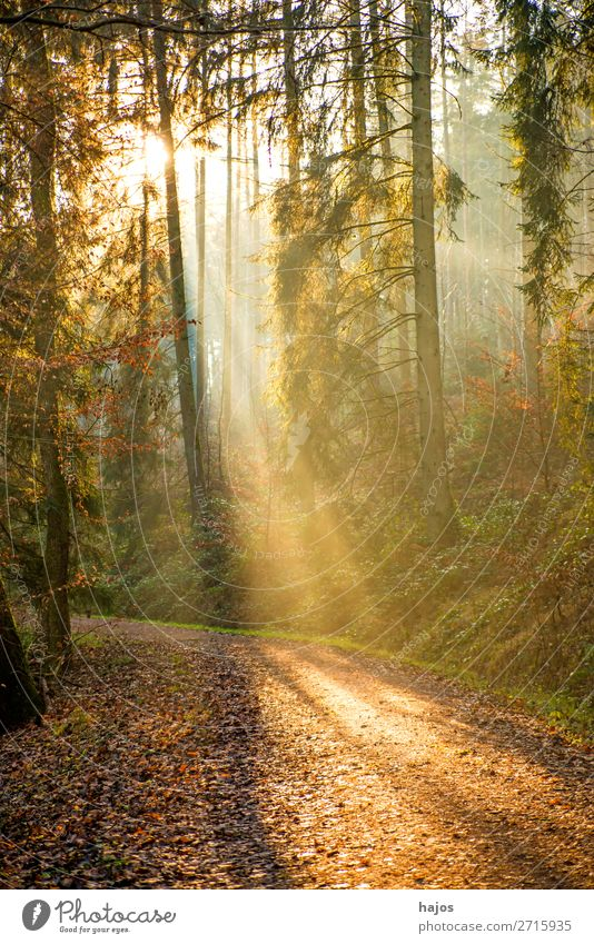 Sunbeams in the forest Relaxation Winter Nature Warmth Forest Soft Idyll spot Light (Natural Phenomenon) Lighting bright Hel jet Fabulous off Autumn