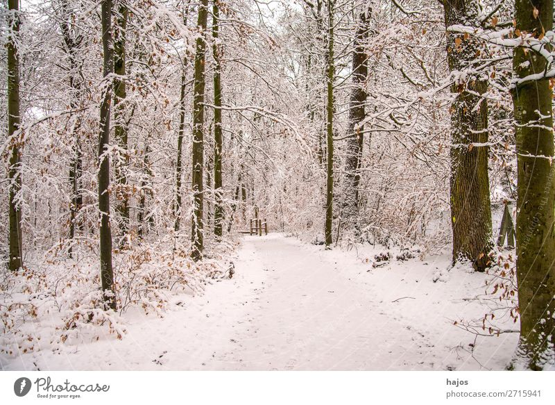 Forest in the snow Winter Nature Weather Snow Tree White snowy off forest path saccharified Idyll Fabulous silent Season Calm Germany covered in deep snow