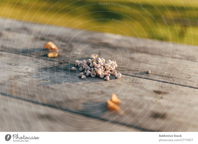 Small shells on wooden table Mussel shell Nature Wood Table marine Natural seashell Object photography Animal Beautiful Detail Close-up Mollusk Aquatic