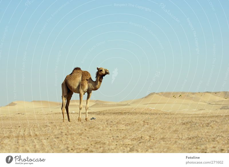 Sky Nature Blue Animal Environment Landscape Warmth Sand Bright Brown Earth Natural Elements Desert Pelt Hot