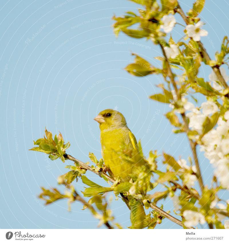 Nature Blue Green Tree Plant Animal Leaf Environment Spring Blossom Bird Wild animal Sit Natural Cute Curiosity