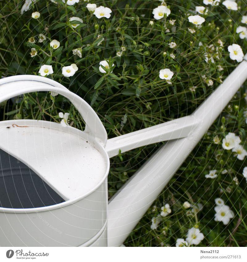 Nature Water White Plant Summer Flower Warmth Grass Spring Garden Metal Esthetic Metalware Beautiful weather Hot Still Life