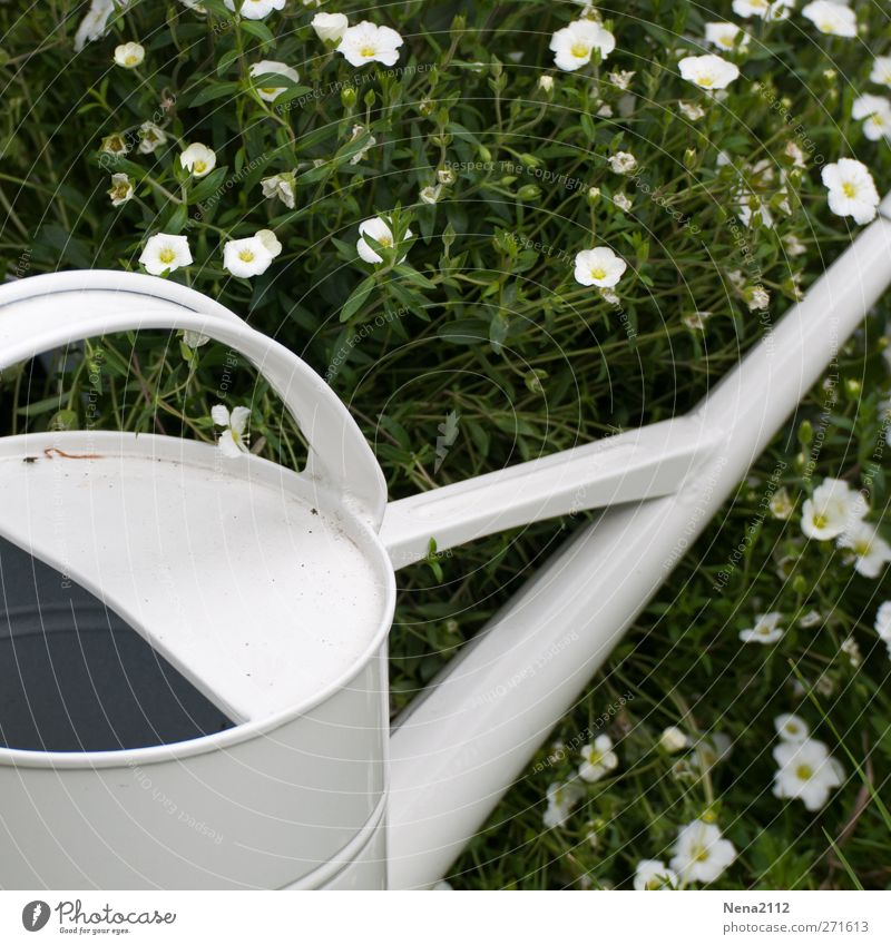 White summer Nature Plant Spring Summer Beautiful weather Flower Grass Garden Esthetic Cast Watering can Hot Metalware Still Life Stationary Warmth Gardening
