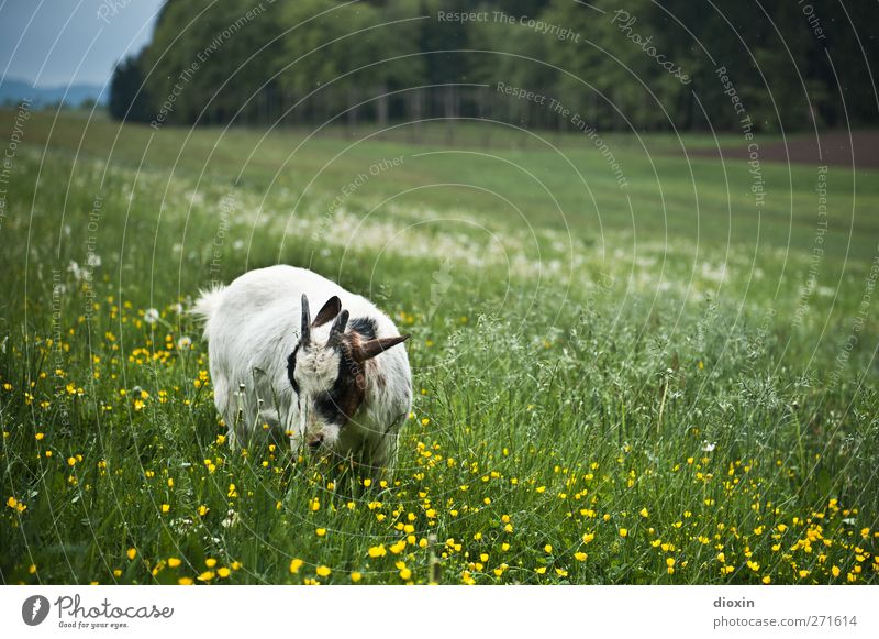 Nature Plant Summer Animal Environment Landscape Meadow Grass Spring Freedom Natural Pelt Hill Agriculture Serene