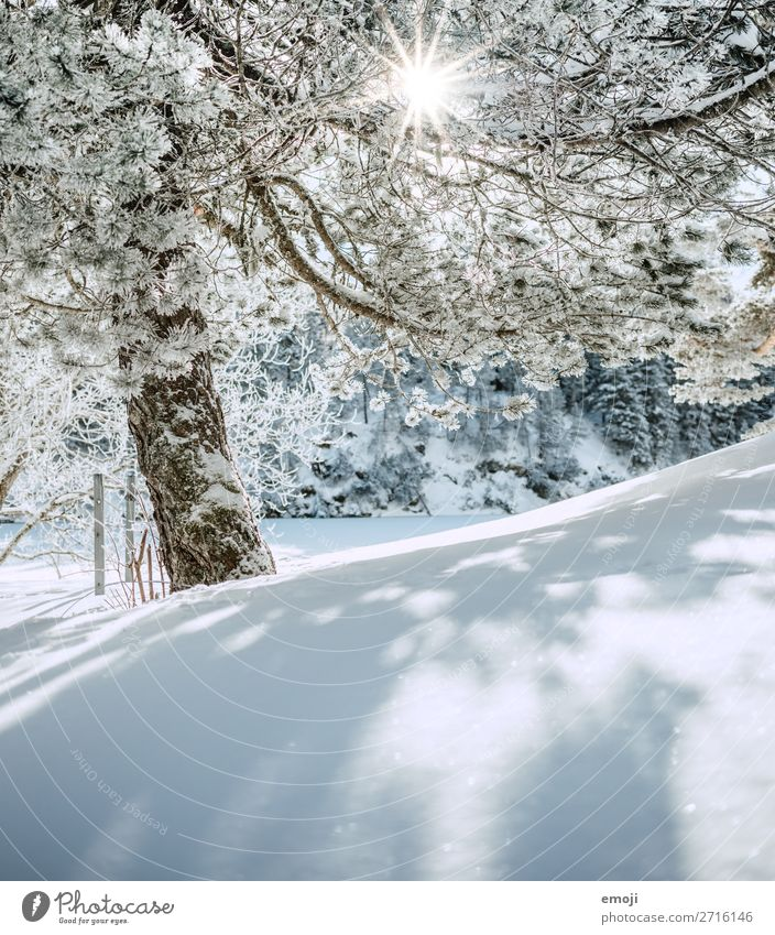 Lake Arnis VII Environment Nature Landscape Winter Beautiful weather Snow Tree Mountain Exceptional Natural Blue White Tourism Calm Switzerland Trip
