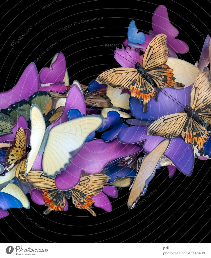 colorful butterfly ornament Beautiful Decoration Animal Butterfly Paper Ornament Together Many Blue Brown Violet Insect Crowded Symbols and metaphors