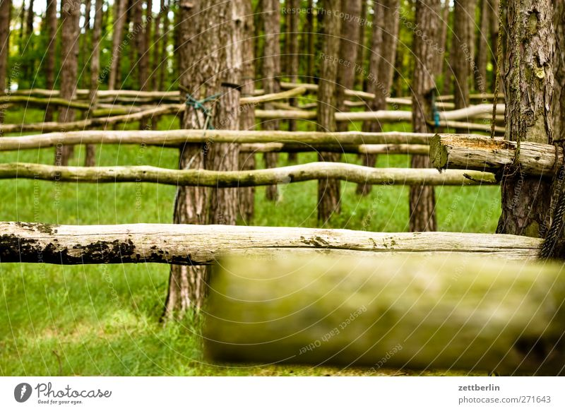 wood Relaxation Vacation & Travel Tourism Trip Adventure Summer Ocean Agriculture Forestry Craft (trade) Environment Nature Landscape Tree Baltic Sea Harbour