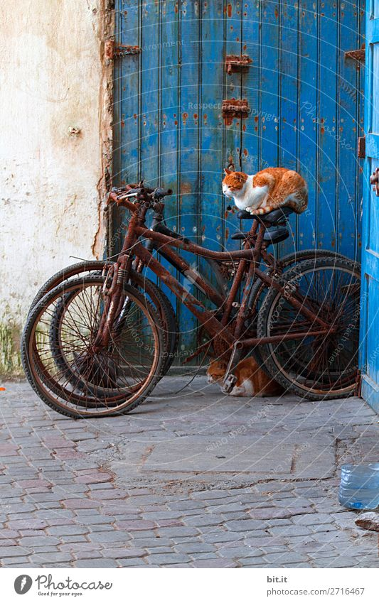 Cat sitting on rusty bike, outside blue door. Vacation & Travel Tourism Trip Adventure Far-off places Freedom Wall (barrier) Wall (building) Door Transport