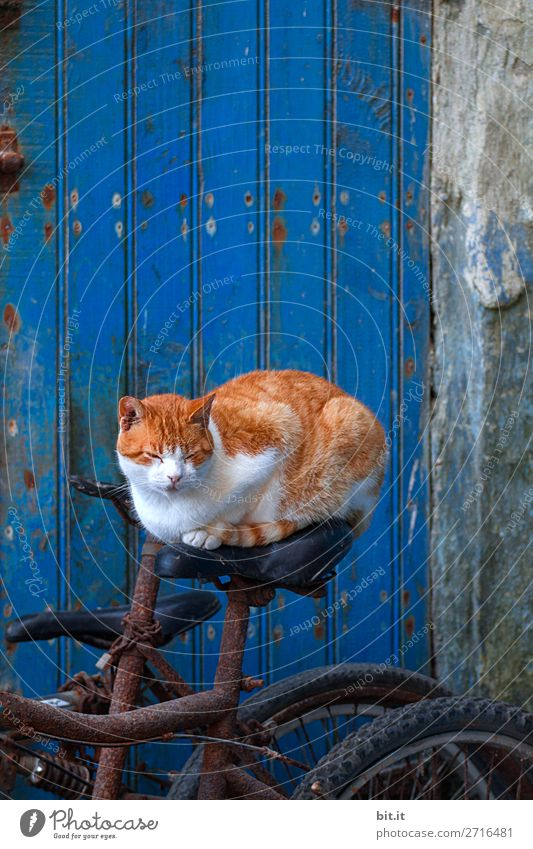 Cat Vacation & Travel Blue Red Animal Street Wall (building) Funny Tourism Wall (barrier) Exceptional Freedom Contentment Bicycle Sit Adventure