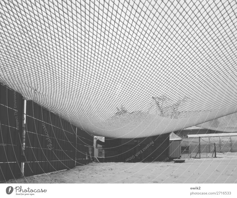 winter net Winter Snow Grass Meadow Net Tense Enclosure Framework Hang Cold Transparent Hazy Greenhouse Tree Fold Empty Protection Safety Black & white photo