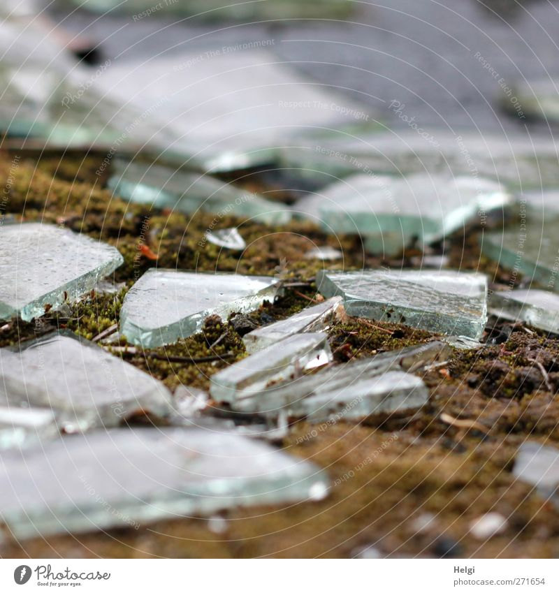 AST 5   broken glass Moss Glass fragment Shard Old Glittering Lie Authentic Sharp-edged Small Brown Gray Green White Emotions Dangerous Force Bizarre Uniqueness