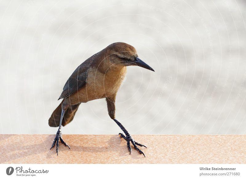 Ocean Animal Movement Coast Small Bird Brown Dance Waves Wild animal Sit Natural Walking Stand Bridge Wing