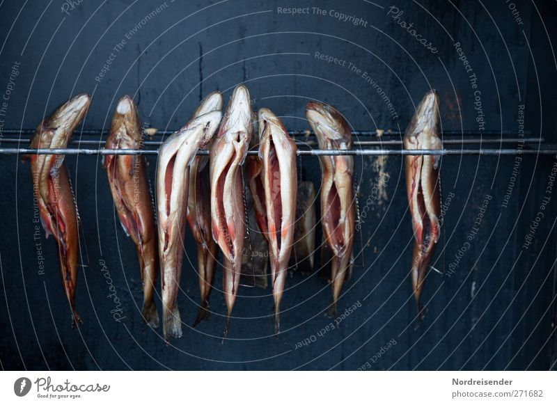 AST5 ...how it smells again. Food Fish Nutrition Organic produce Gastronomy Metal Fragrance Hang Kipper Smoked trout char smoke oven Whimsical