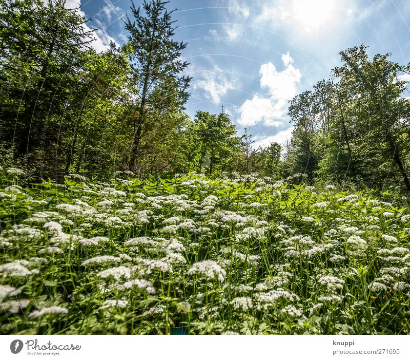 Sky Nature Blue White Green Tree Plant Sun Summer Flower Leaf Clouds Forest Environment Landscape Meadow