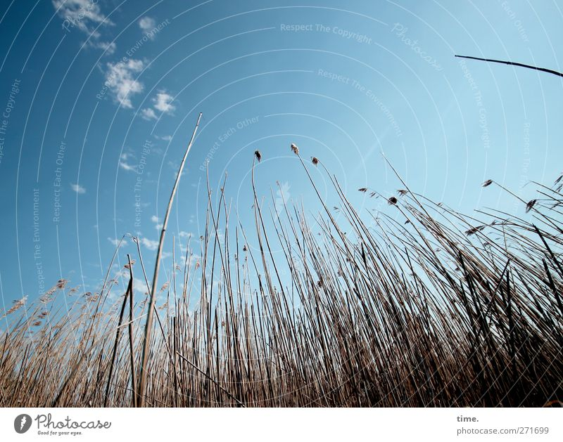 Hiddensee. Dive down. Environment Nature Plant Sky Clouds Beautiful weather Grass Blade of grass Coast Emotions Happy Contentment Safety Protection Attentive