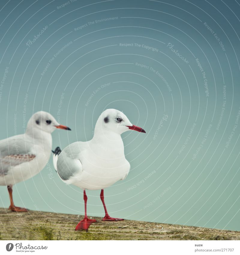 Sky Nature Blue White Animal Calm Environment Cold Wood Small Air Bird Wild animal Pair of animals Wait Stand