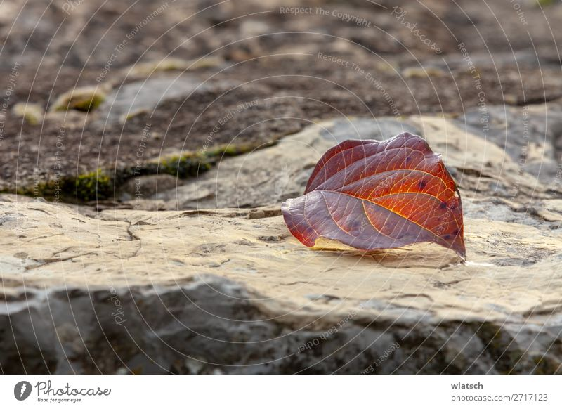 "Rocks in autumn Environment Nature Landscape Earth Leaf Garden Forest Brown Calm Climate Transience Change ""Veins Life Water Autumn To fall Winter Season"