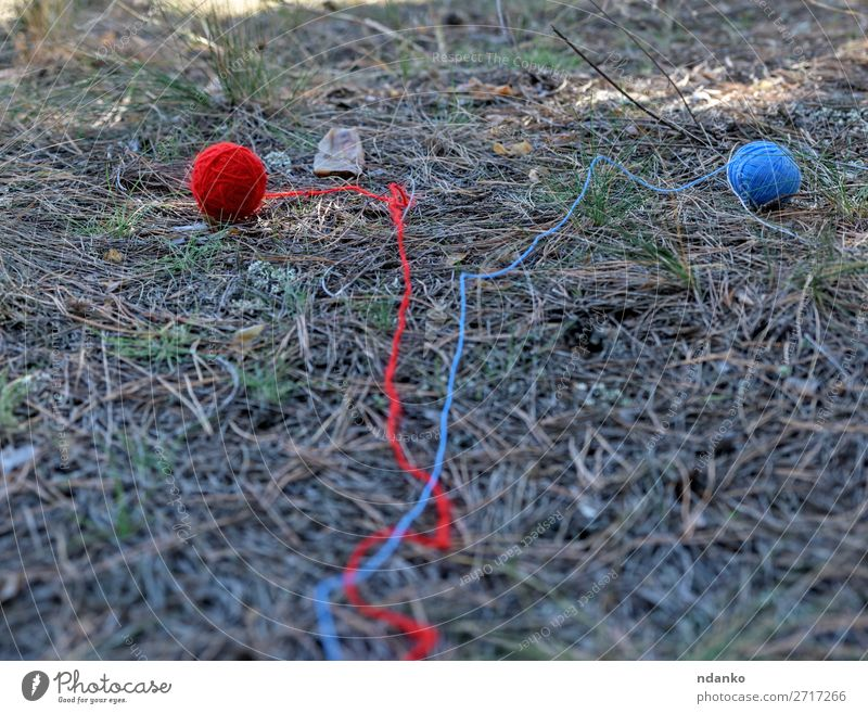 two little wool ball unwound in the middle of the forest Summer Nature Grass Forest Lanes & trails Movement Walking Blue Green Red Adventure Idea Survive clew