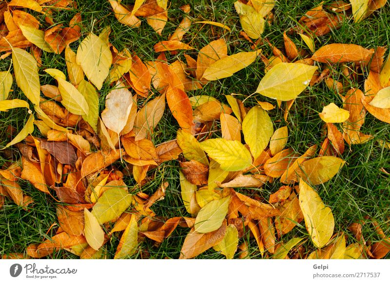Fallen leaves of trees Design Beautiful Garden Decoration Nature Plant Autumn Grass Leaf Park Forest Natural Brown Green Colour maple fall background Seasons