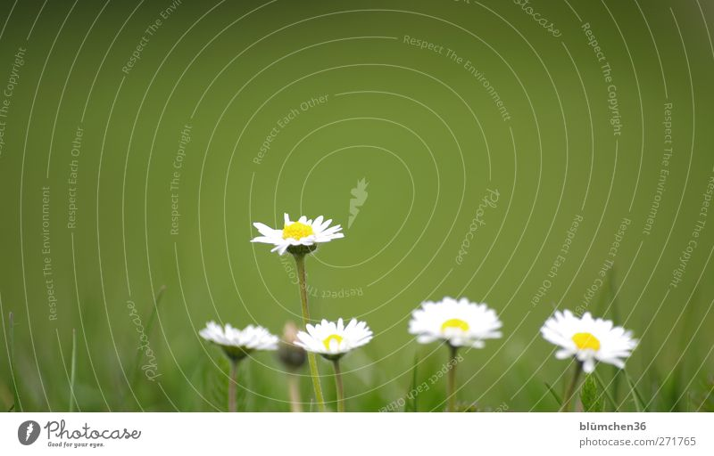 Nature White Green Beautiful Plant Summer Flower Joy Yellow Spring Small Blossom Natural Growth Esthetic Happiness