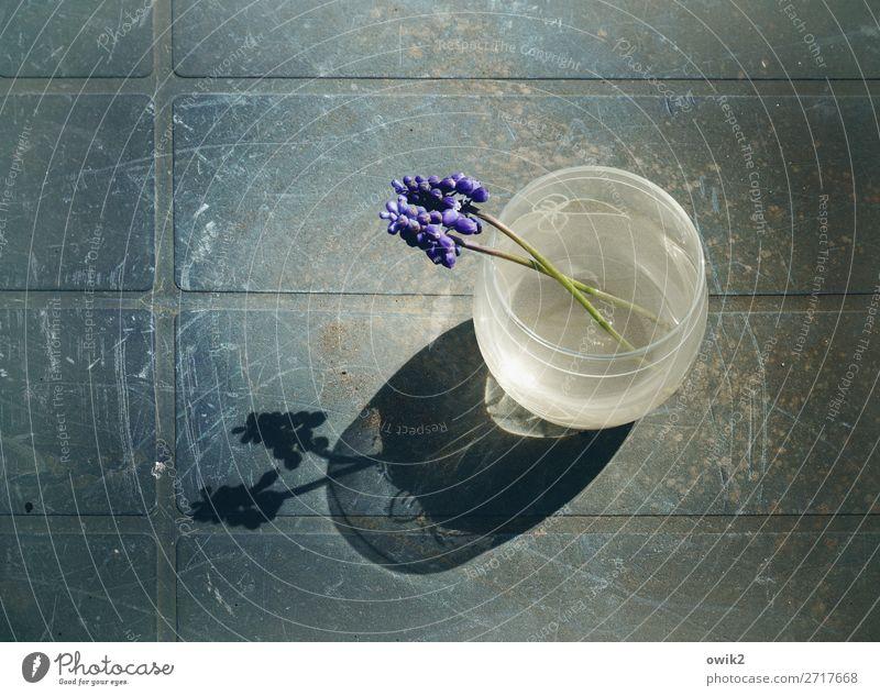 Nature Summer Plant Flower Calm Emotions Glass Table Romance Plastic Vase Agreed Muscari