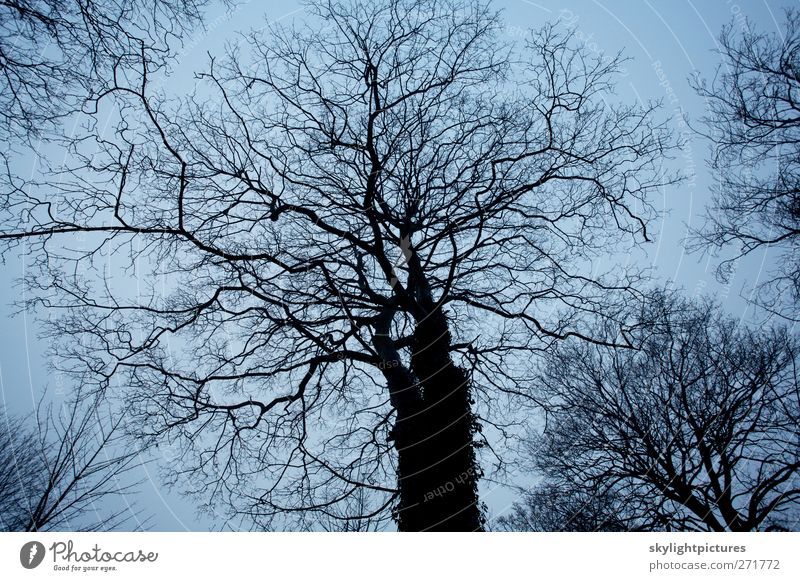 Winter trees Nature Plant Sky Tree Forest Dark Creepy Cold Black Moody branch Bare sillouette stark trunk wood arbour Subdued colour Exterior shot Pattern