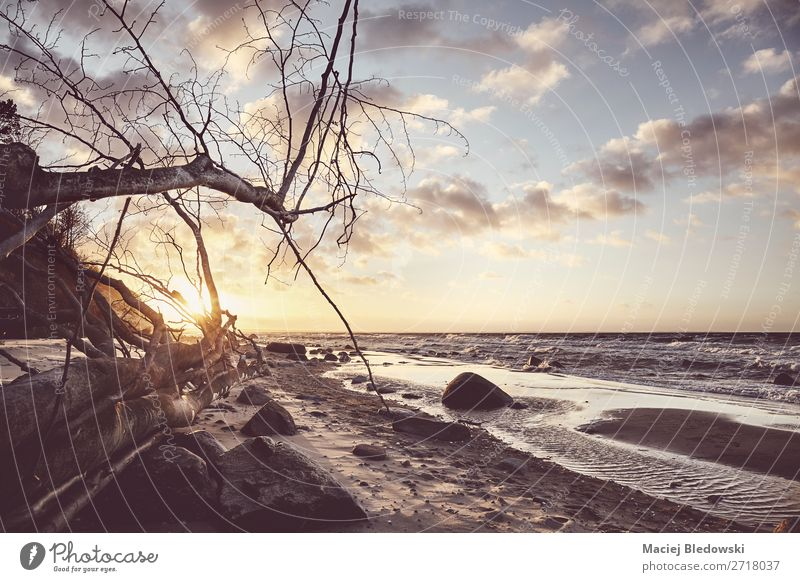 Scenic beach with a fallen tree at sunset. Sky Vacation & Travel Nature Landscape Tree Ocean Relaxation Far-off places Beach Coast Tourism Freedom Sand Trip