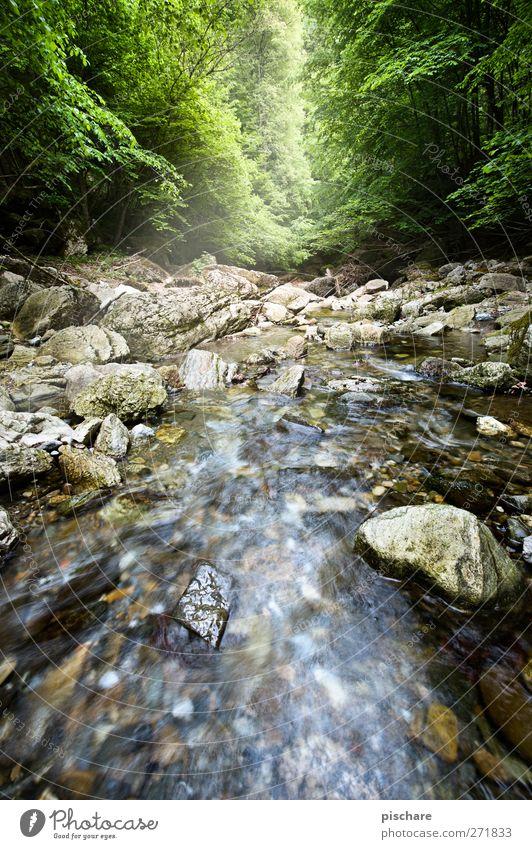 Nature Water Forest Landscape Rock River Brook