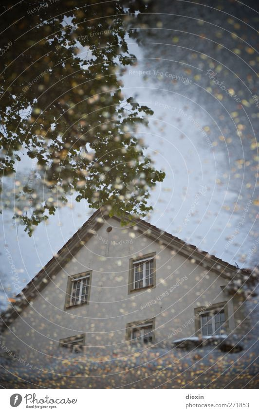City Tree Leaf House (Residential Structure) Window Wall (building) Architecture Wall (barrier) Building Rain Weather Facade Wet Roof Puddle Bad weather