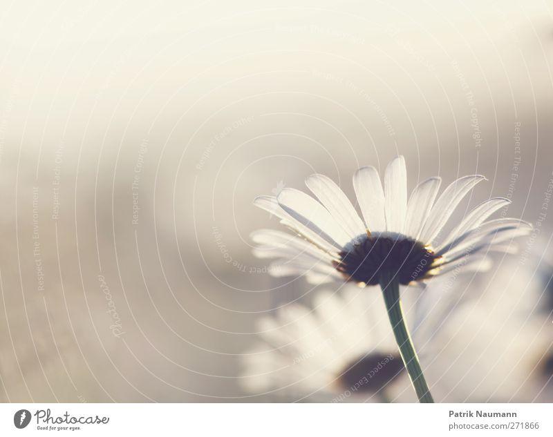 Nature Plant White Flower Animal Joy Environment Blossom Emotions Meadow Natural Happy Glittering Growth Illuminate Idyll
