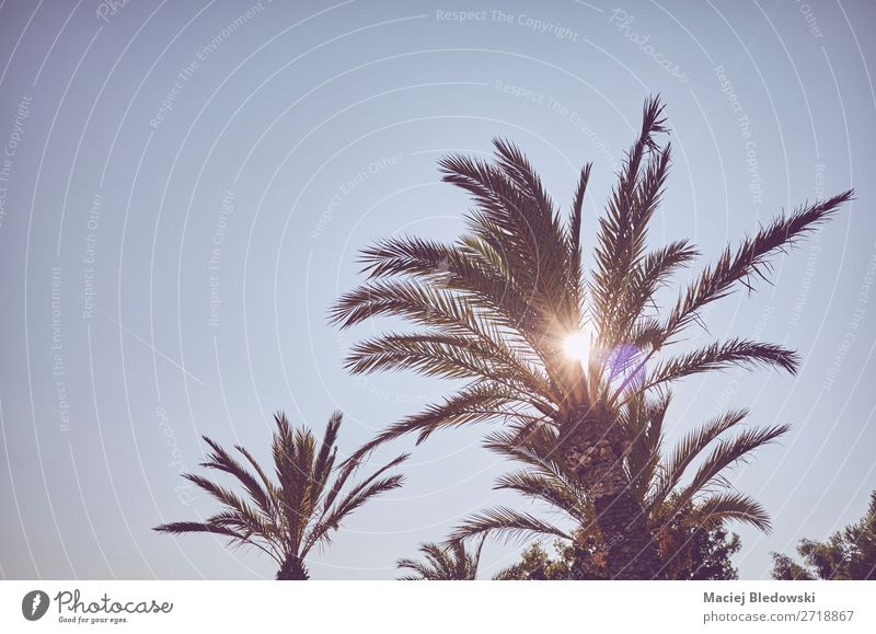 Looking up at palm trees at sunset. Vacation & Travel Tourism Trip Adventure Summer Summer vacation Sun Island Wallpaper Nature Plant Cloudless sky