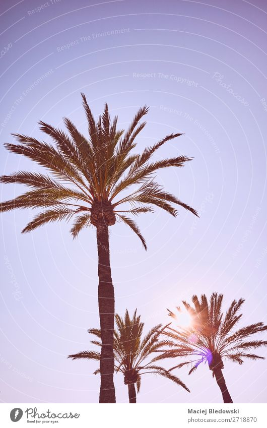 Looking up at palm trees at sunset. Vacation & Travel Expedition Summer Summer vacation Sun Sunbathing Beach Island Wallpaper Nature Sky Cloudless sky Tree