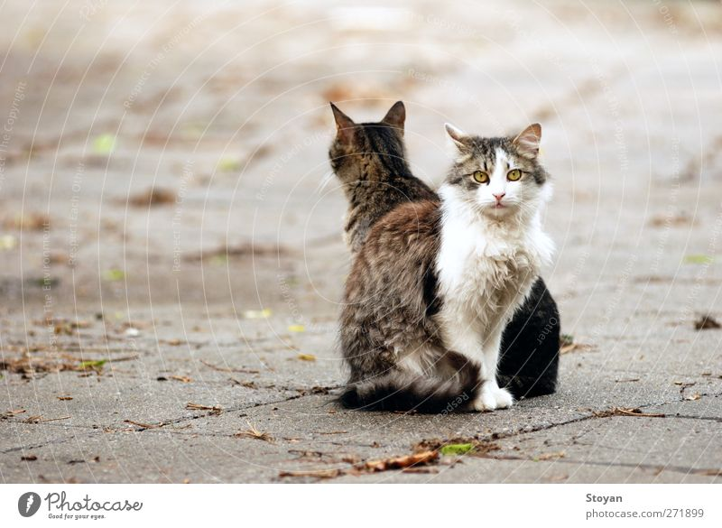 street cats Cat Beautiful Animal Dark Happy Healthy Together Sit Wild animal Pair of animals Free Authentic Happiness Cool (slang) Friendliness Pet