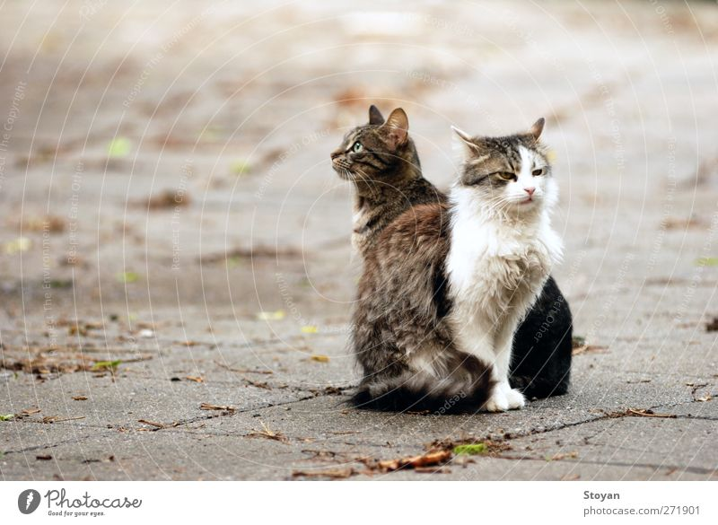 street cats II Cat Animal Love Freedom Dream Wild animal Pair of animals Safety Hope Protection Trust Surprise Pet Pride Goodness Animal family