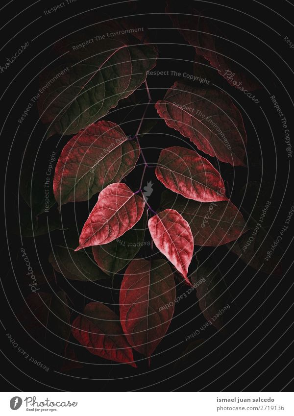 beautiful red plant leaves texture in the garden Plant Leaf Red Garden Floral Nature Decoration Ornament Abstract Consistency Fresh Exterior shot background