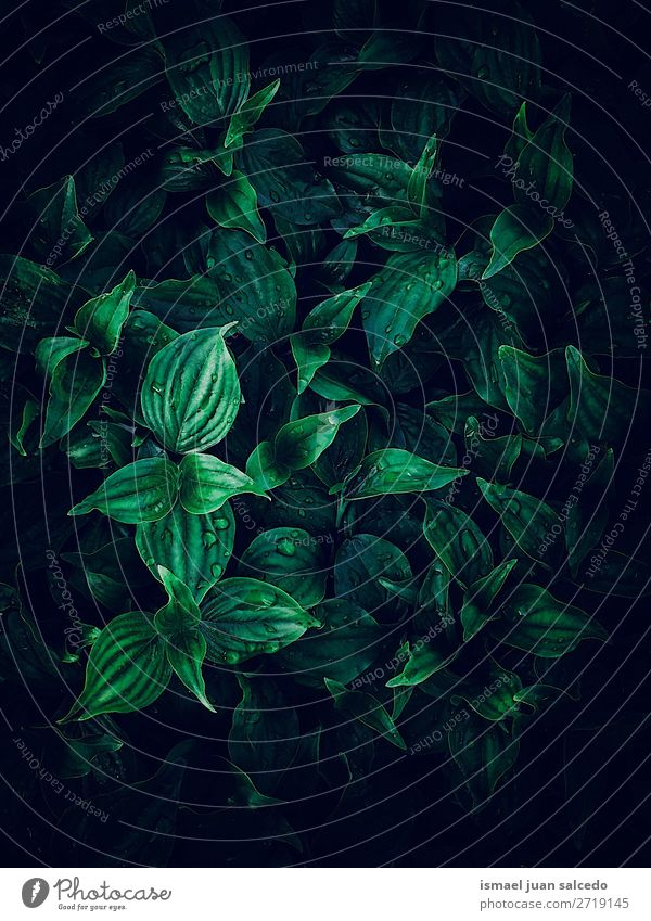 beautiful green plant leaves texture in the garden Plant Leaf Green Garden Floral Nature Decoration Ornament Abstract Consistency Fresh Exterior shot background