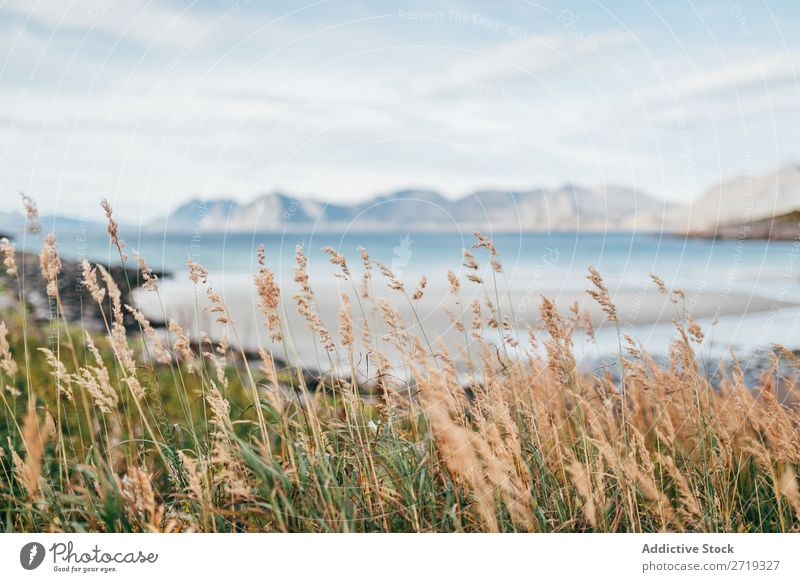 Spike grass on highland Grass Lake Mountain Nature Landscape Wind Water Sky spike lets Vantage point Majestic Alpine Wilderness Calm Peaceful Grassland Clear