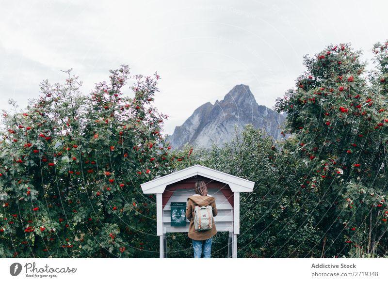 Woman sending letters Mailbox Peak Rowan tree Tree Nature Vantage point Backpack