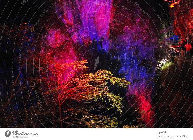 Magic Forest1 Art Work of art Environment Nature Landscape Tree Bushes Rock Emotions Moody Esthetic Exotic Colour Creativity Culture Senses Colour photo