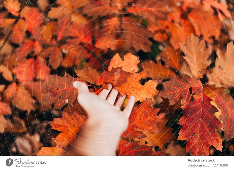 Crop hand touching bright leaves Leaf Autumn Bright Touch Beauty Photography Seasons Red