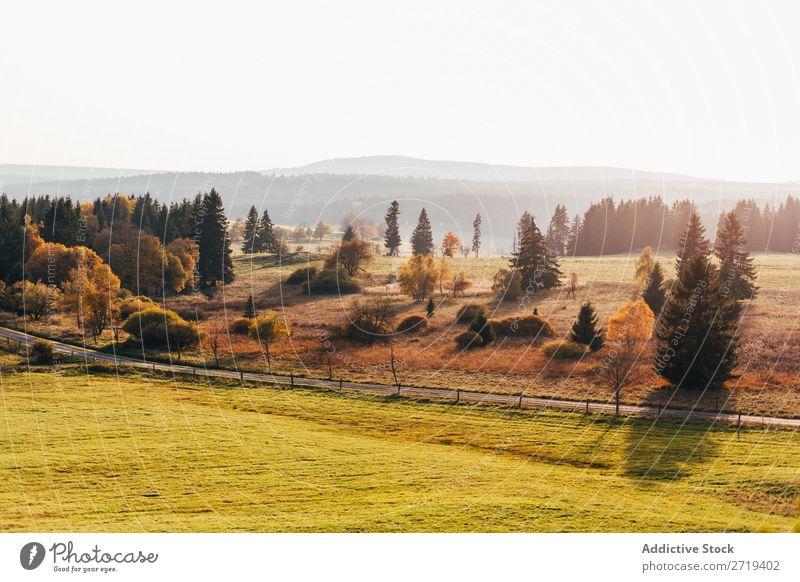 Grassland in bright morning light Landscape Morning Freedom Vantage point Natural Field