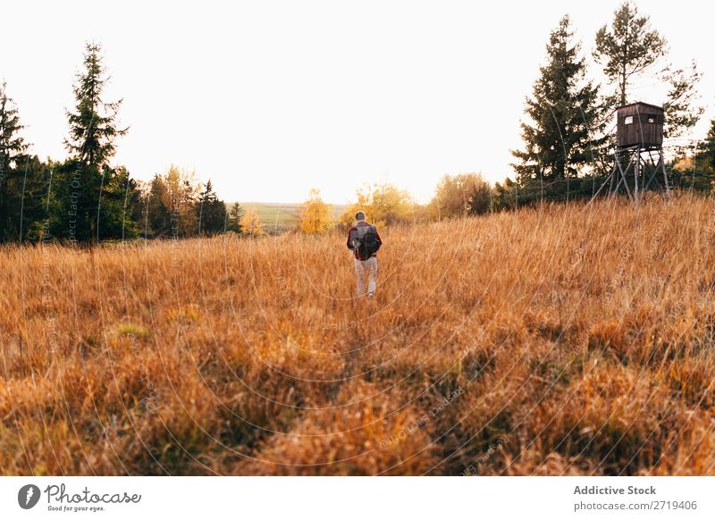Traveler in golden fields Landscape Countries Remote Freedom Environment Valley Tree