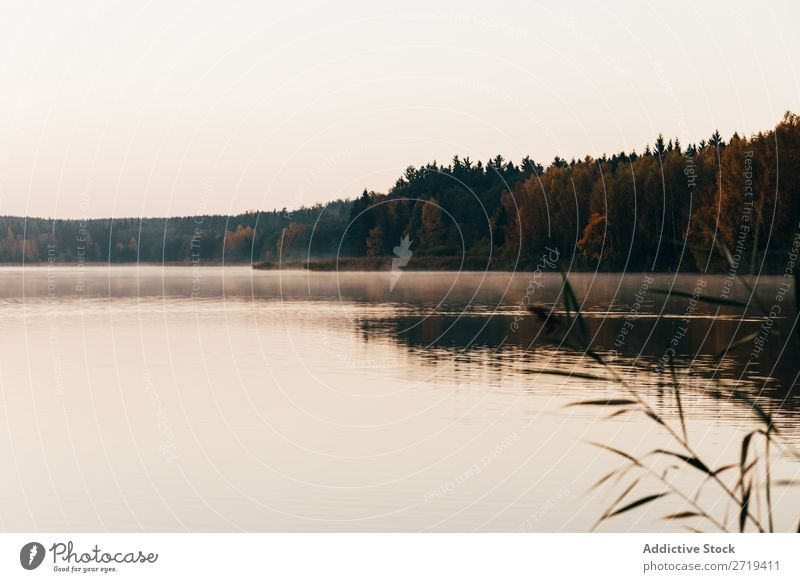 Calm lake surface in morning Lake Haze Morning Nature Reflection Beauty Photography Mystery Natural