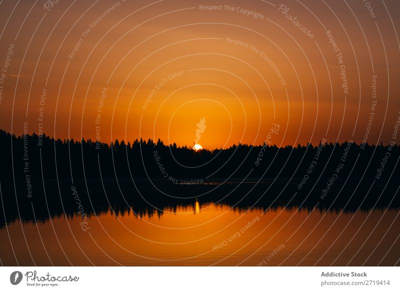 Golden sunset above calm lake Lake Sunset Dark Silhouette Reflection Surface Nature