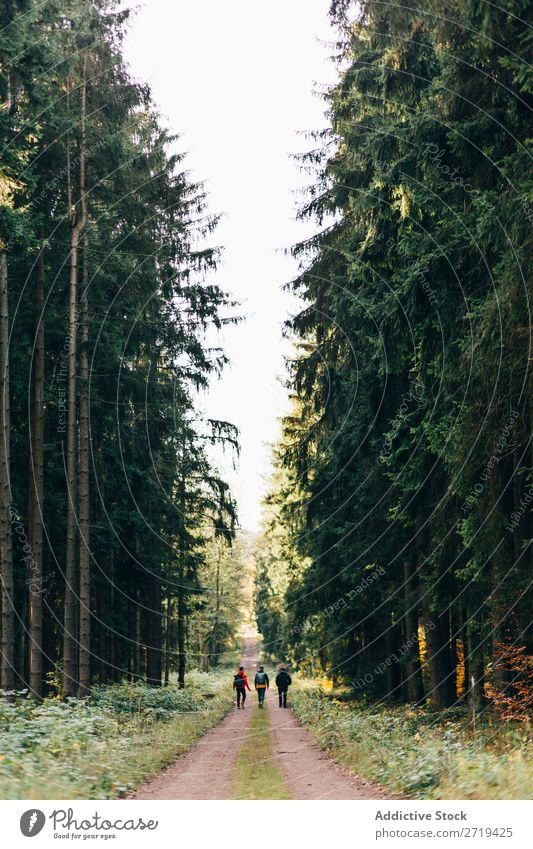 Travelers in coniferous woods travelers Forest Nature Freedom wonderland Vacation & Travel Evergreen Landscape backpackers Vantage point Peaceful Discovery